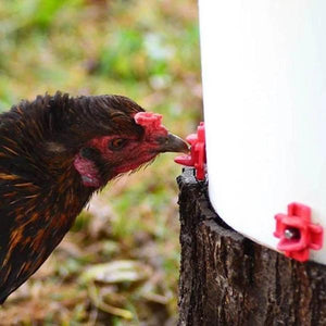 50% OFF TODAY 🔥- Horizontal Side Mount Chicken Waterer