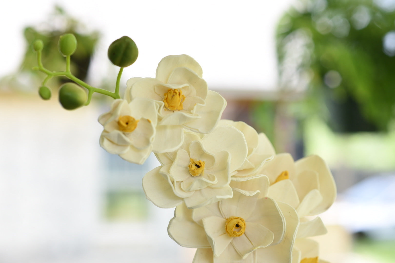 White Orchid (Yellow Center)