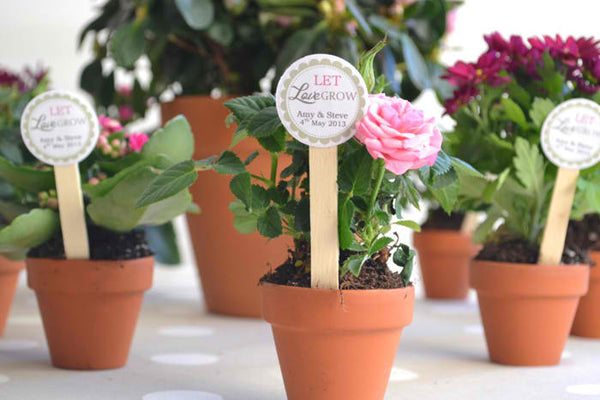 Wedding Plant Favors