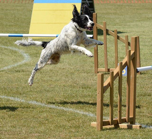 Hundeschule - Das professionelle Hundetraining