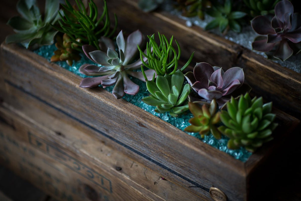 Succulents in Signature DIRT Box Large
