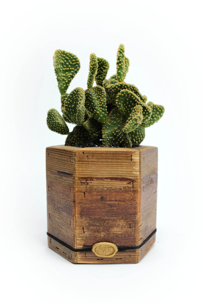 Small and Tall Signature Handmade DIRT Hexagon Box with Succulent