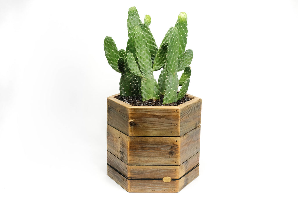 The Triple Decker Signature Handmade DIRT Hexagon Box with Succulent