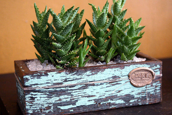Succulents in Signature DIRT Box