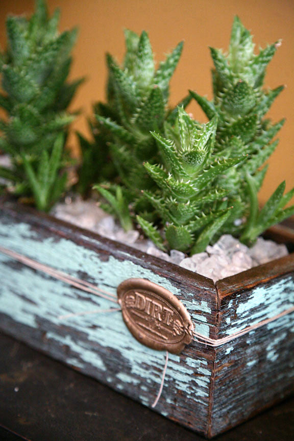 Succulents in Signature DIRT Box Medium