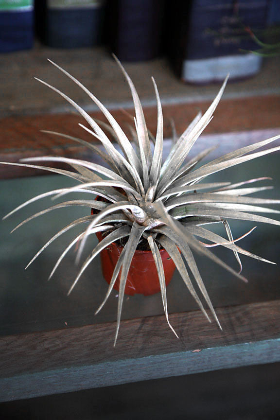 Medium Potted Airplant