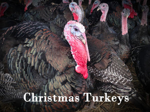 Christmas Turkeys For Small and Large Gatherings
