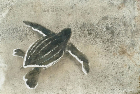 First Steps - Leatherback Sea Turtle Metal Drawing