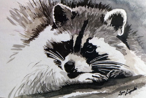 Raccoon Study (Watercolour and Ink)