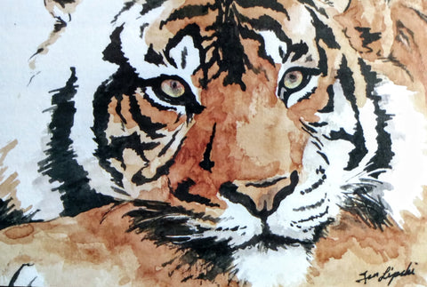 Tiger Study (Watercolour and Ink)