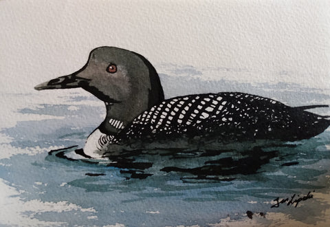 Loon Study (Watercolour and Ink)