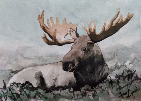 Resting Moose Study (Watercolour and Ink)