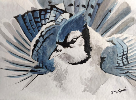 Blue Jay Study (Watercolour and Ink)