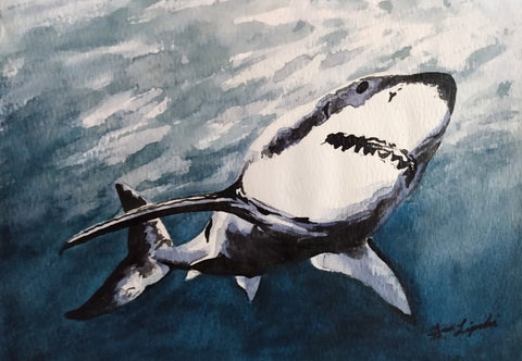 Great White Shark Study (Watercolour and Ink)