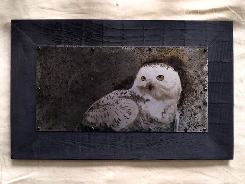 Snowy Owl Study Metal Drawing