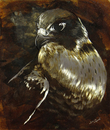 Untitled Peregrine - Peregrine Falcon Metal Drawing