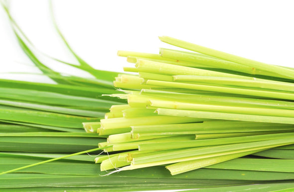 Citronella_indian_RW35AAE3T5NY.jpg