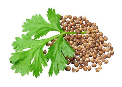 coriander-leaves-and-seeds_RX9F0LO7FP1K.jpg
