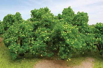 50-55mm Lemon Tree Grove