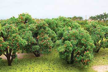 50-55mm Orange Tree Grove