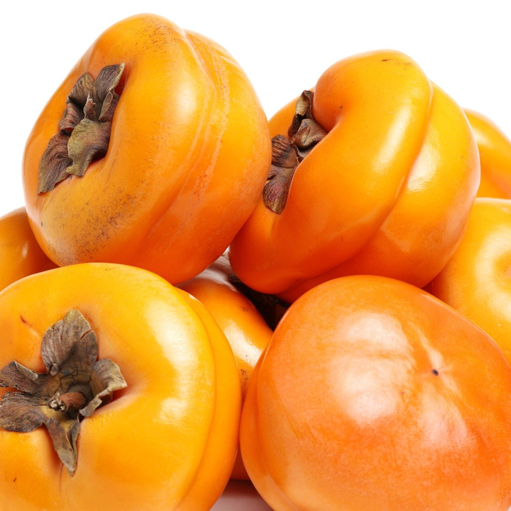 Tamopan Asian Persimmon Diospyros kaki