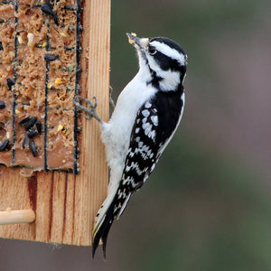 Woodpeckers, Nuthatches & Chickadees