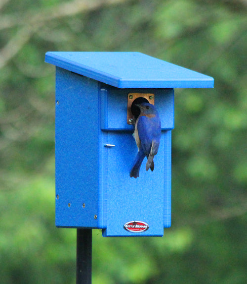 bluebird on blue nest box