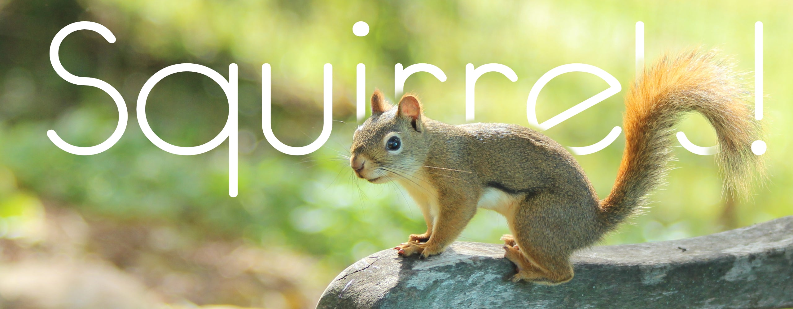 squirrel with text