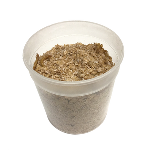 Live Mealworms (Large)