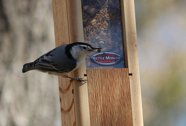 nuthatch eating from woodpecker feeder