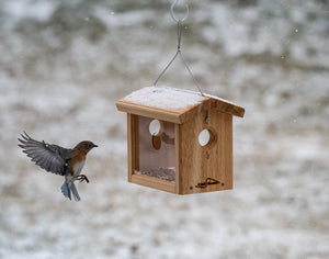cedar hanging bluebird feeder with bluebird landing