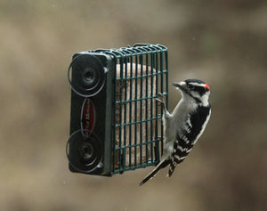 woodpecker on window mount suet feeder