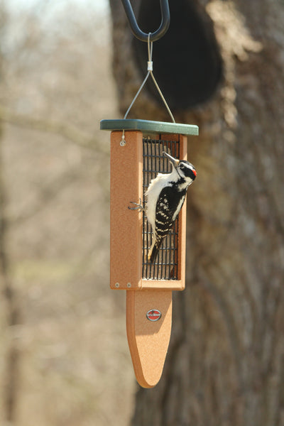 woodpecker on recycled plastic suet feeder