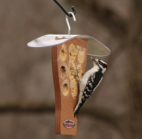 woodpecker on peanut butter feeder with roof