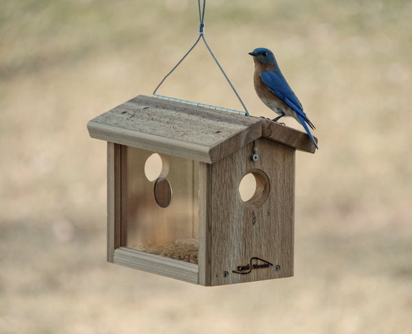 bluebird perched on cedar feeder