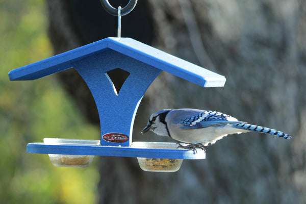 blue jay at recycled blue bird cup feeder