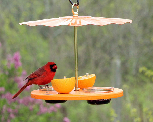 cardinal eating on oriole cup feeder