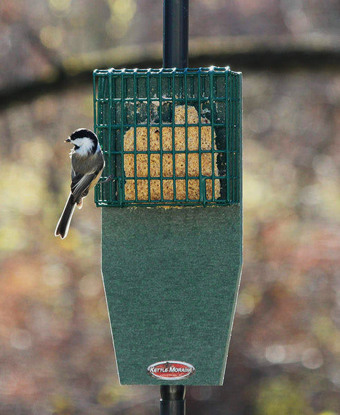 chickadee perched on suet feeder