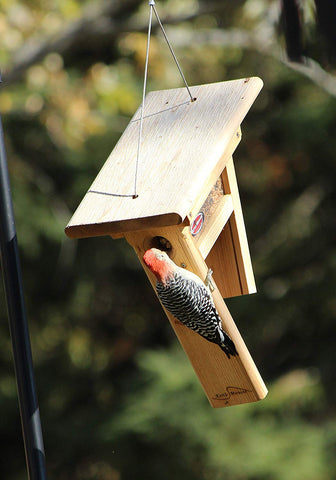 woodpecker clinging to cedar feeder