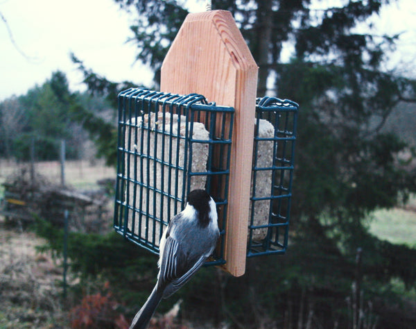nuthatch at hanging suet feeder