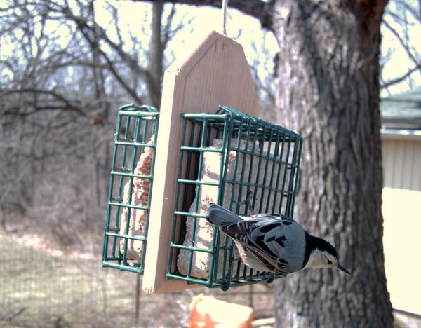 nuthatch eating suet on hanging feeder