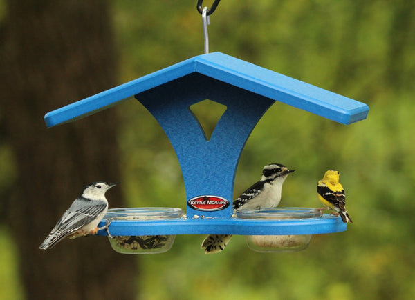 nuthatch, woodpecker, and goldfinch eating at bird feeder