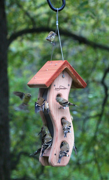 young goldfinches on cedar kettle moraine wave feeder