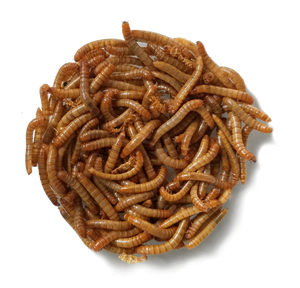 healthy live mealworms for bluebirds or reptiles