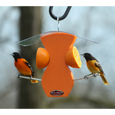 two orioles eating at orange feeder