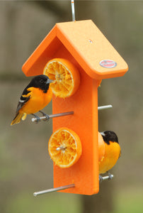 orioles on kettle moraine bird feeder with oranges