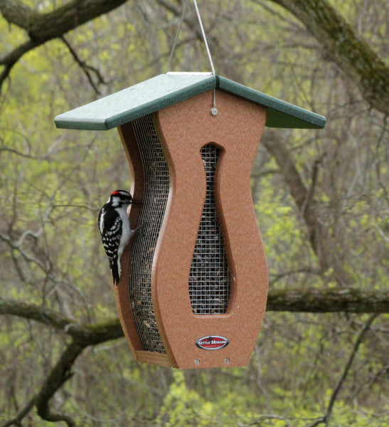 woodpecker on kettle moraine curved screen feeder