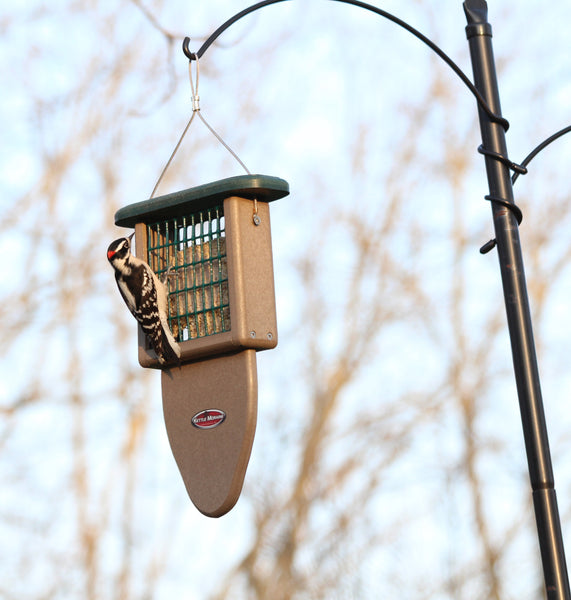 bird eating from kettle moraine suet feeder