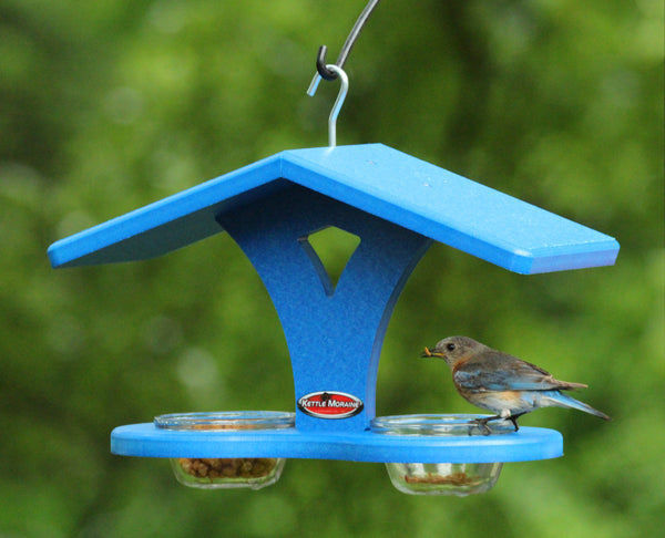 blue cup feeder with bluebird