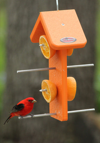 Tanager on double orange feeder